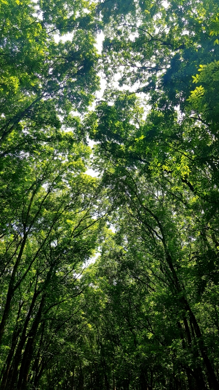 manmade forest 1