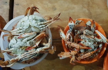 Patar Bolinao Seafood